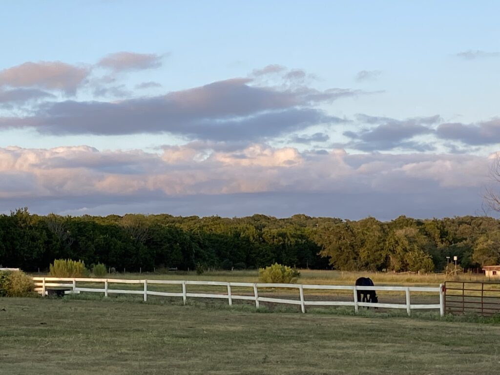 Horse in paddock at Bel Canto Farms