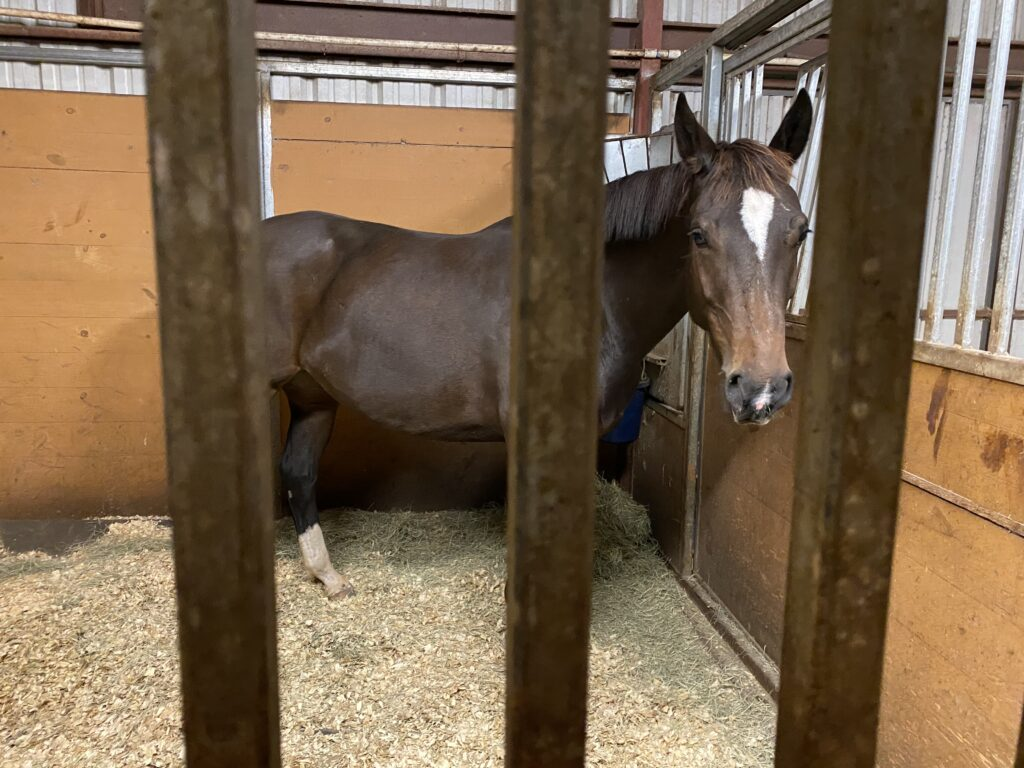 brown horse inside stall at bel canto farms