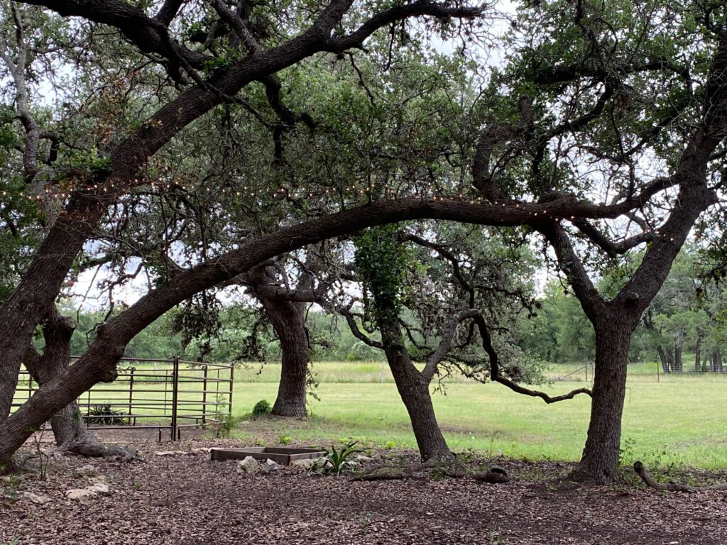Trees in paddocks for horses at Bel Canto Farms