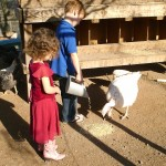 Bringing Up Birds: Raising Chickens and Other Backyard Fowl