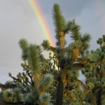 Joshua Trees: Proof God Has a Sense of Humor and It Is Beautiful