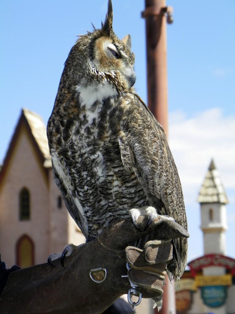 Owl by Celebrating Family
