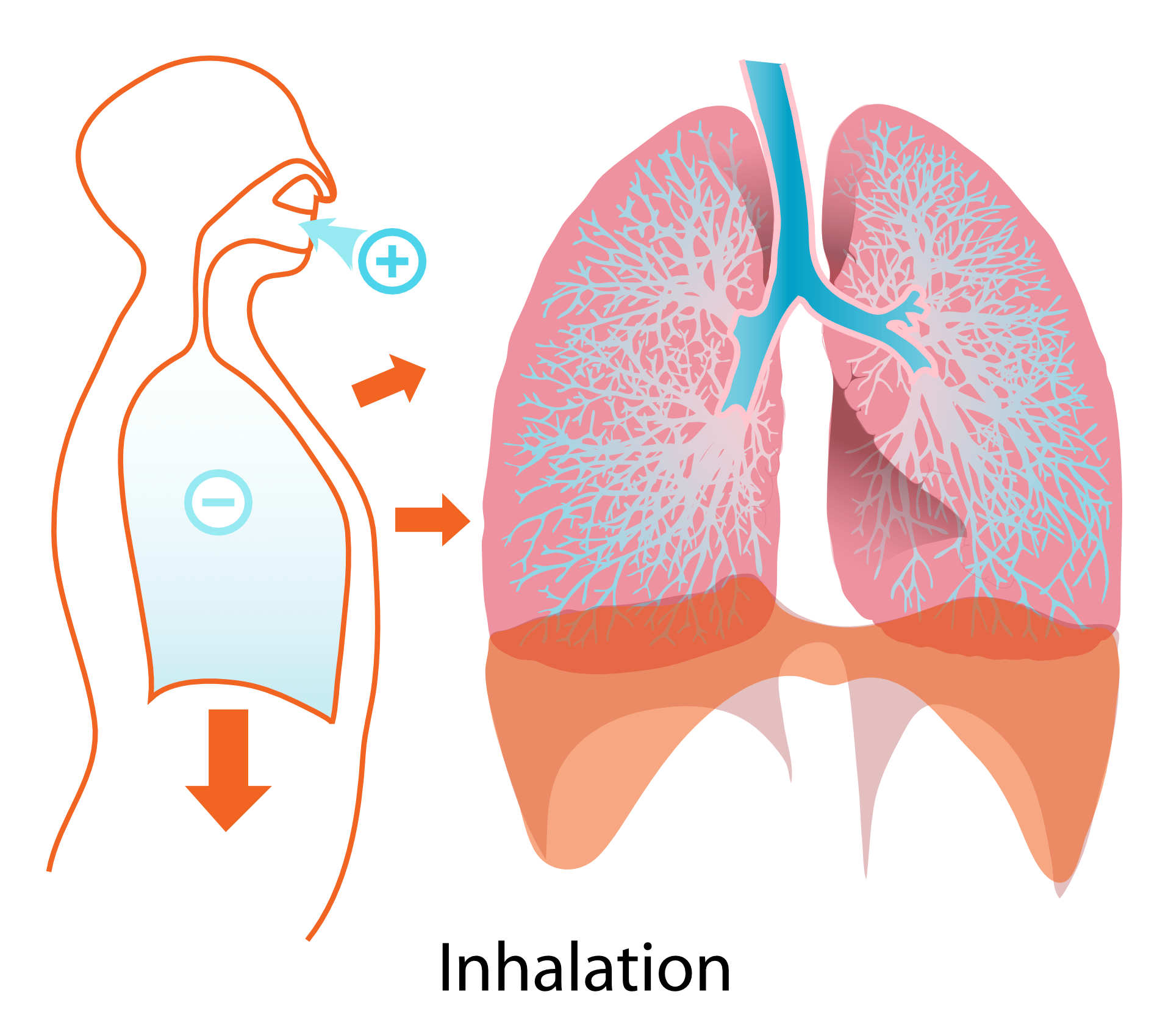 Breath Training For Stress And Anxiety
