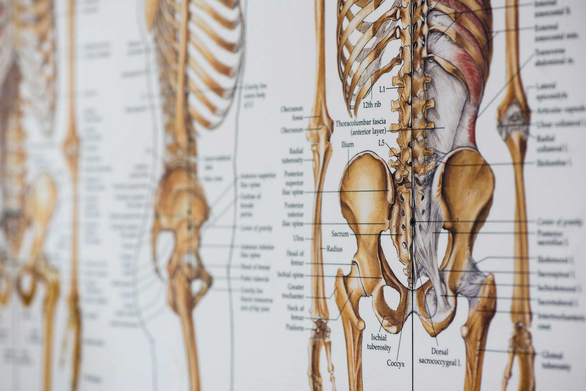 Natural Low Back Pain Treatment In Ballard Chiropractic