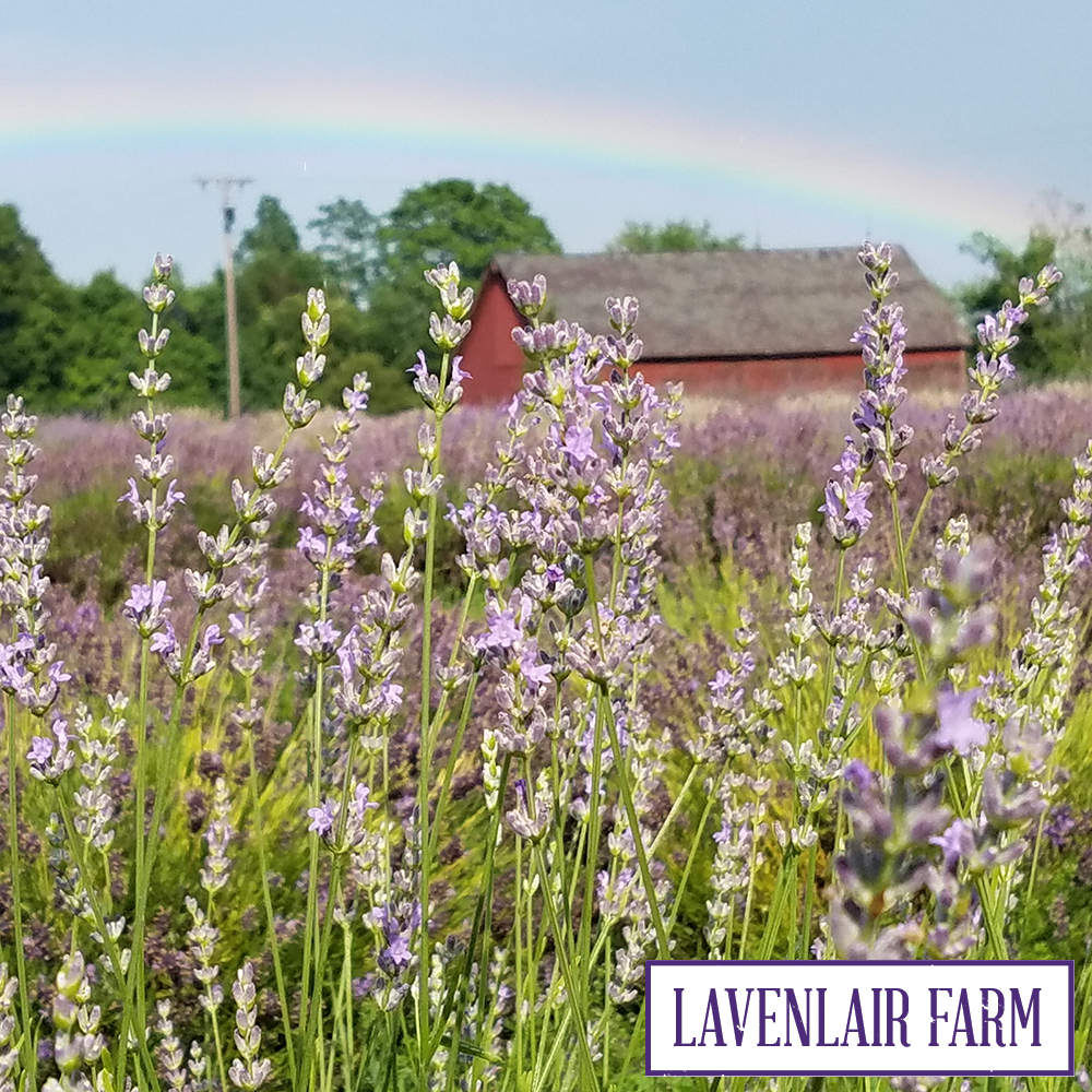 lavenlair farm