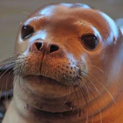 News – Monk Seal Hospital