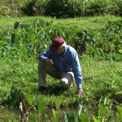 Video – SpringStar Mosquito Traps