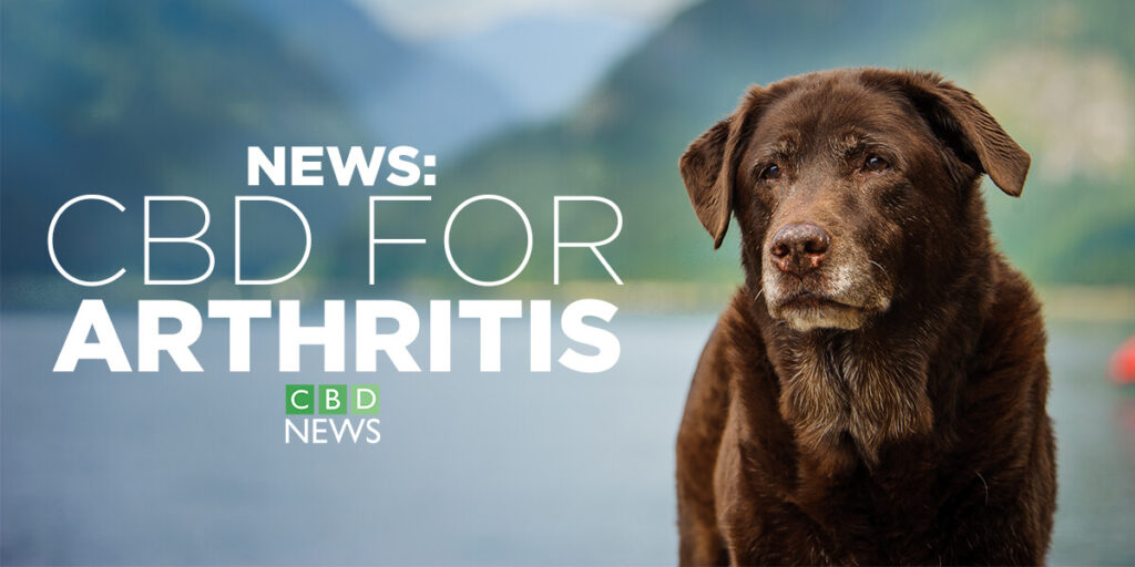 CBD for dogs with arthritis