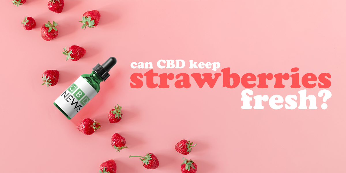 can CBD keep strawberries fresh