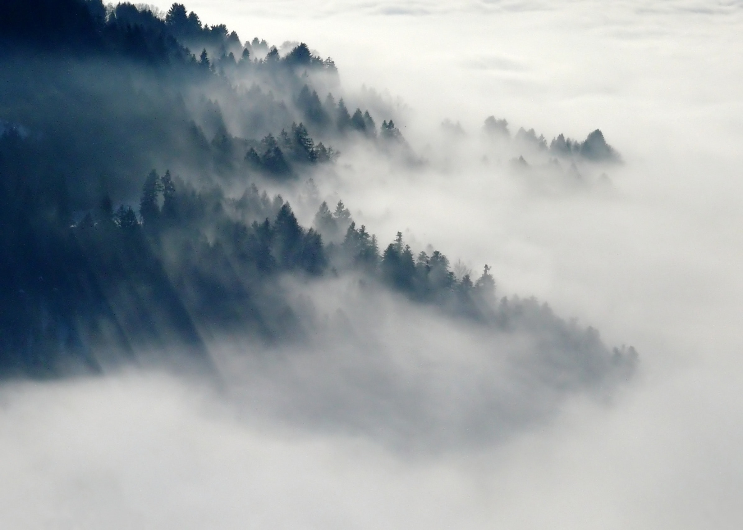 foggy hidden coast scenic byway header