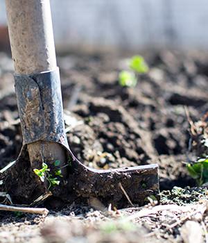 Photo of shovel in dirt