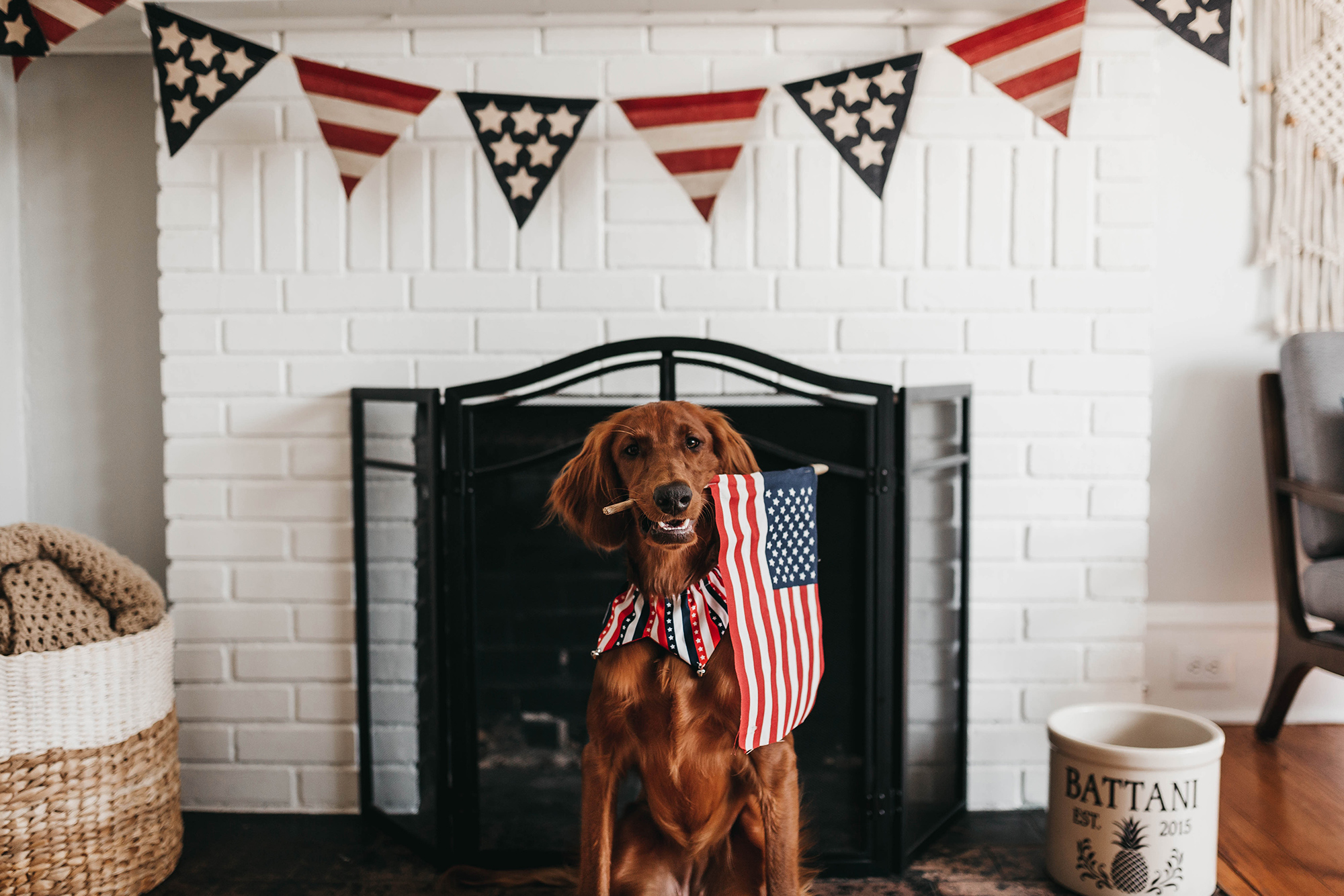 Dog holding American flag in its mouth