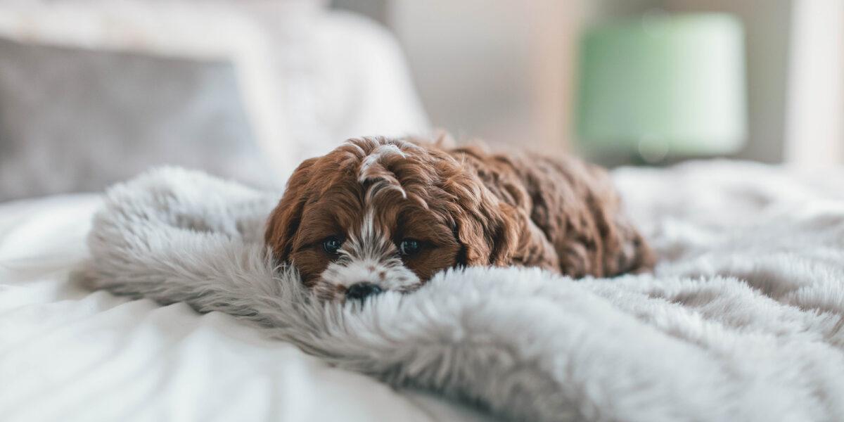 dog asleep on a comfortable blanket