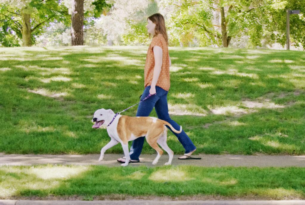 Woman walking dog on sidewalk near grass and trees
