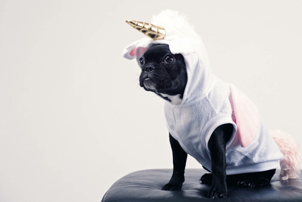 Dog sitting on a chair in a unicorn costume