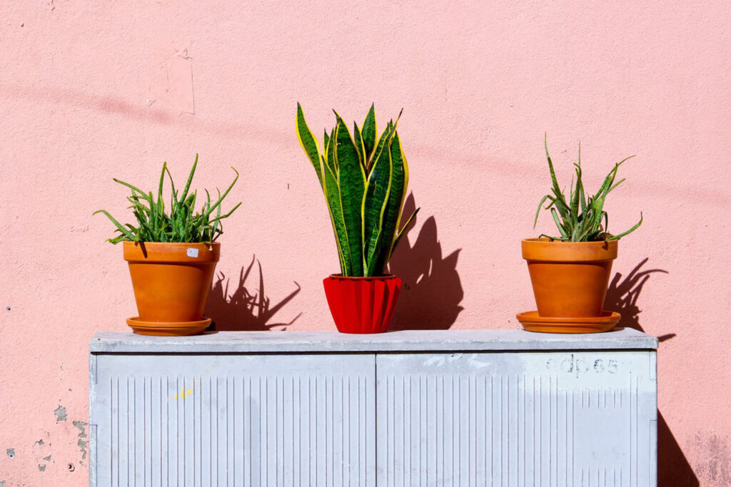 Three terracotta planters with small plants in each