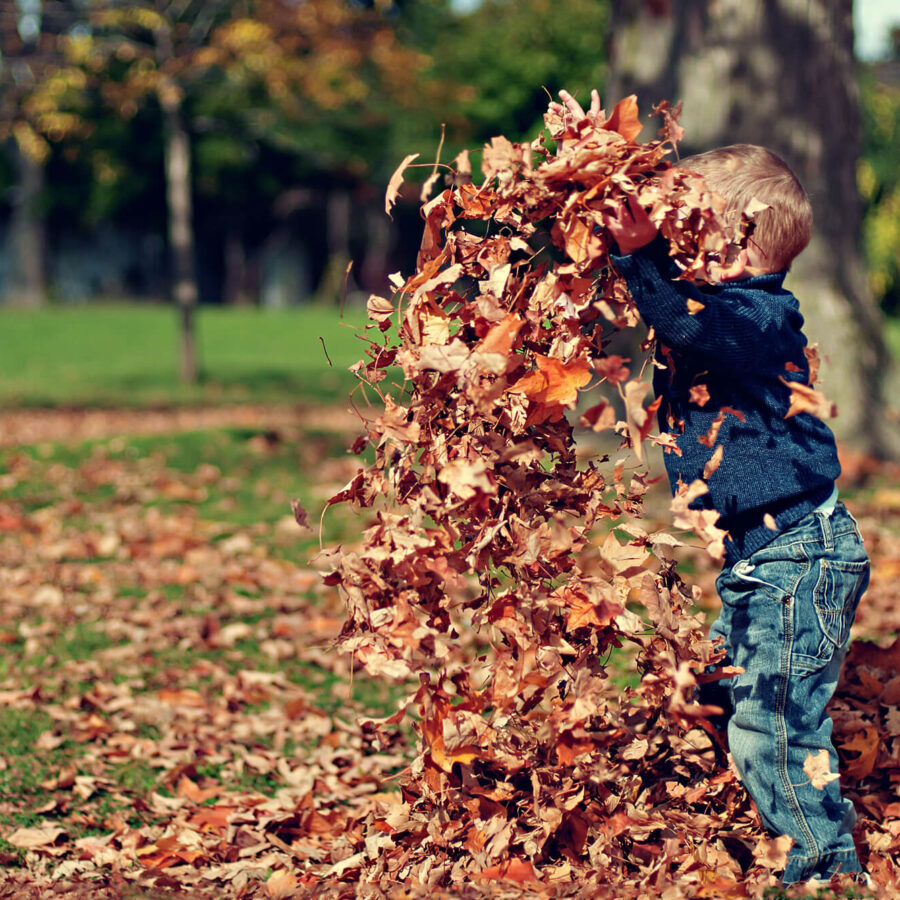 Little child playing in leaves
