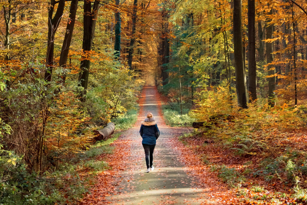 Person walking in a forest