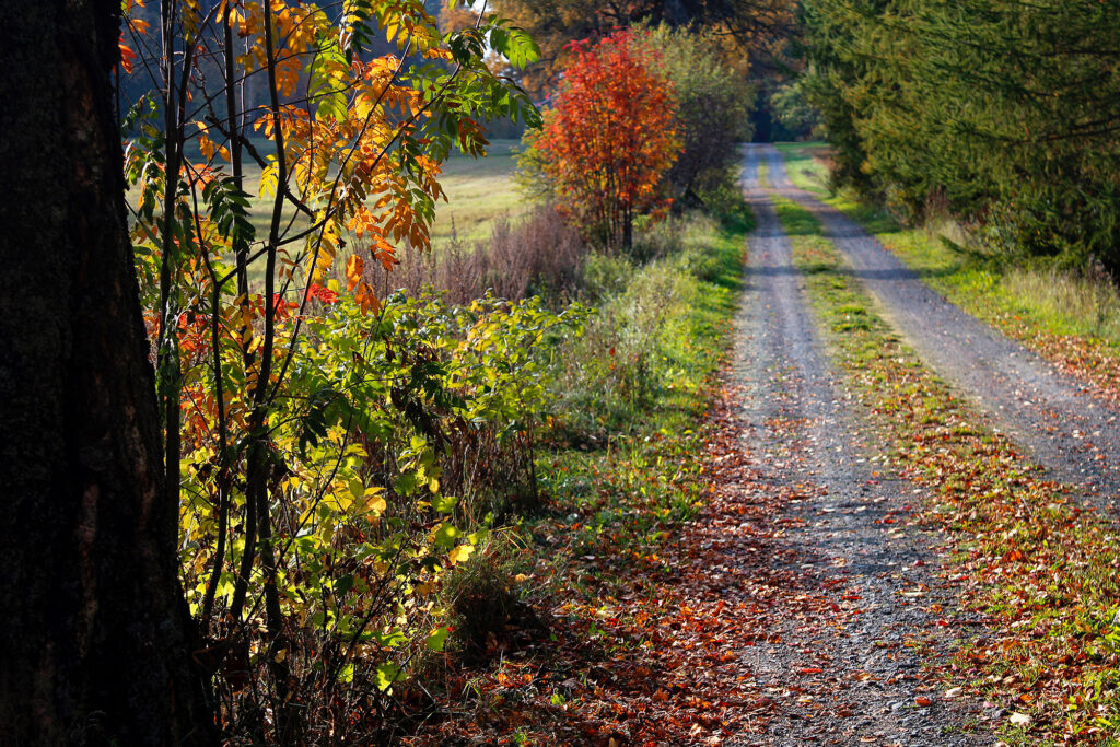 Country road with leaves
