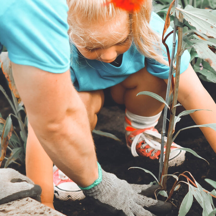 Little girl planting with the help of an adult