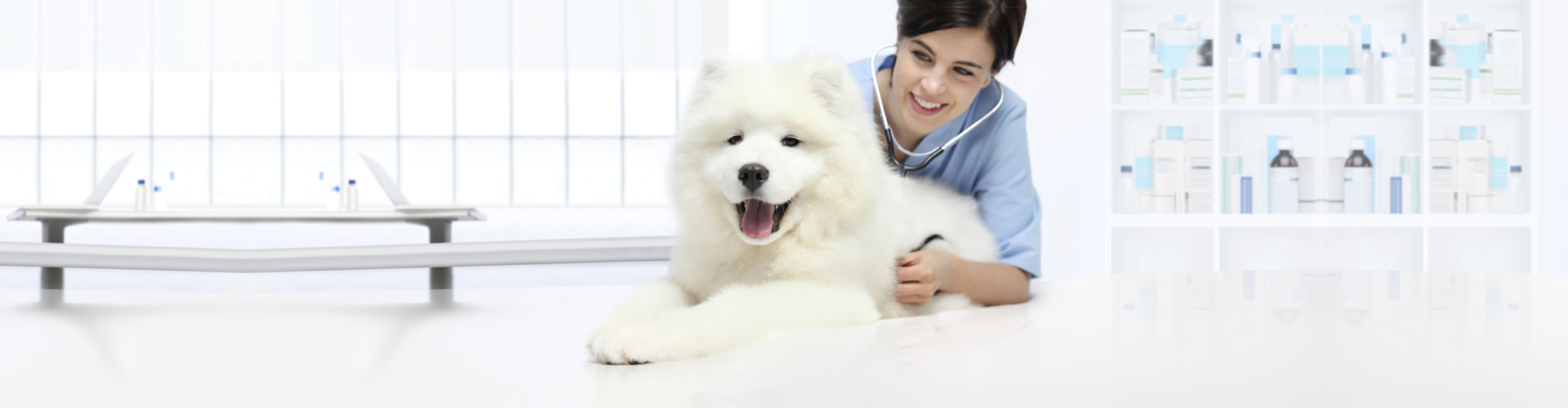 dog veterinary examination smiling Veterinarian with stethoscope listening on table in vet clinic