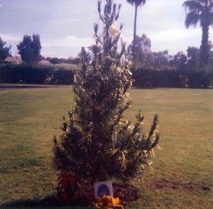 Tree Planting Broadway & Randolph,  Tucson, AZ December 1984