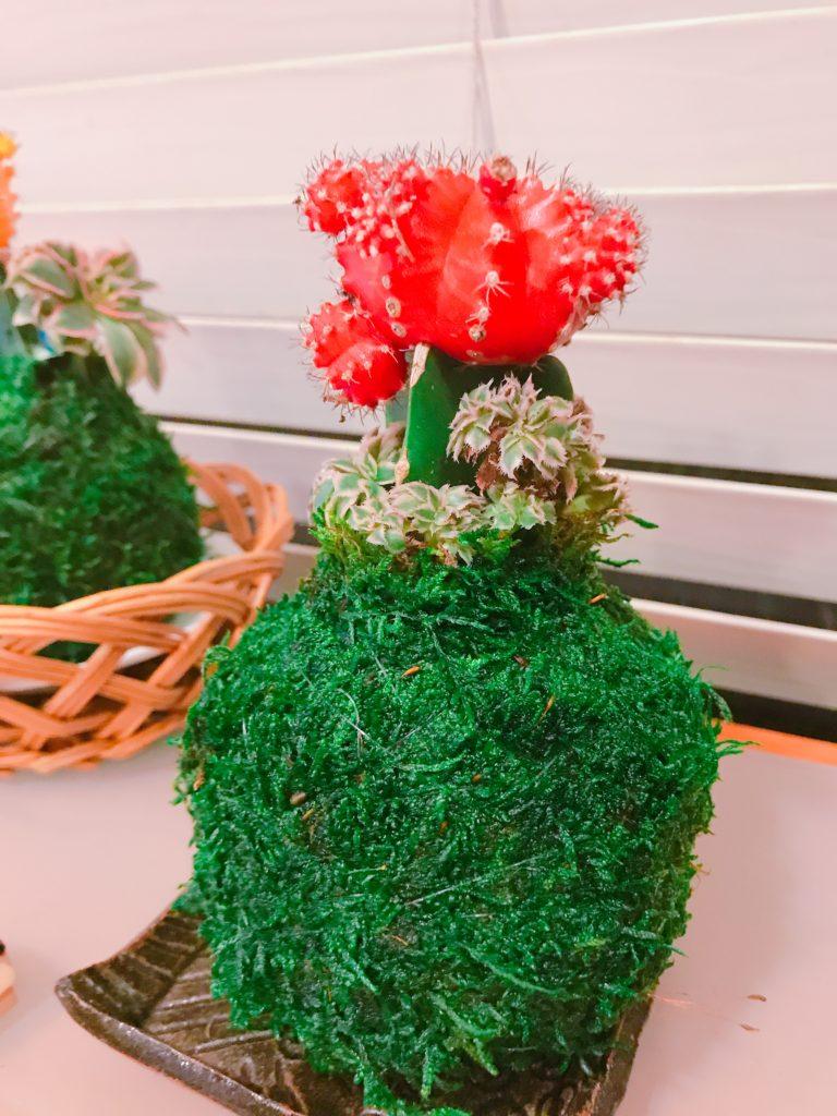 Moon Cacti