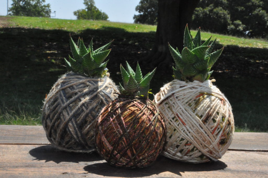 Succulents wrapped with Jute