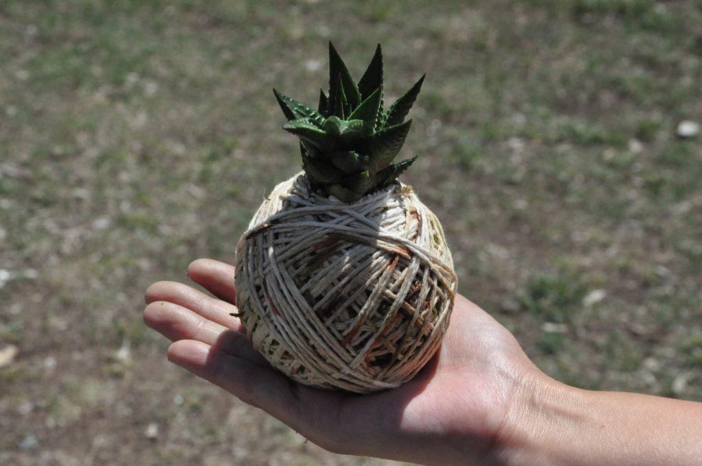 Palm size