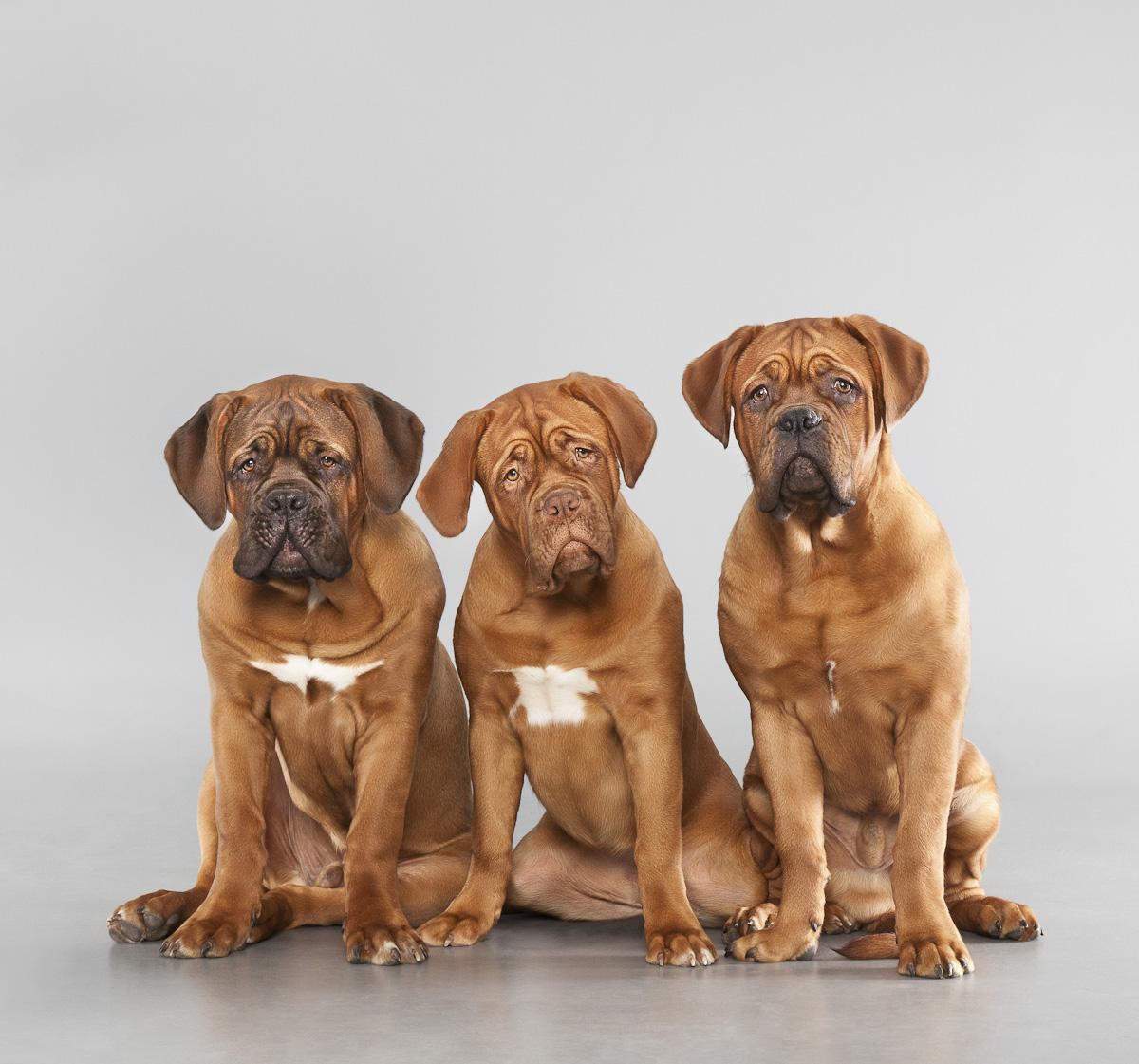 Milestone Bordeaux Auum Pets