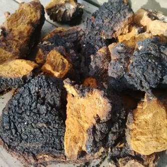 chaga-mushroom-for-sale-antioxidants