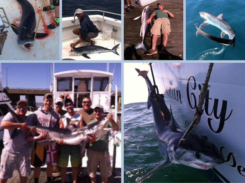 Shark Fishing Trips Ocean City Maryland (1)