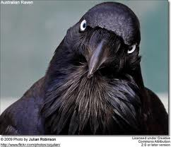 ravendirect