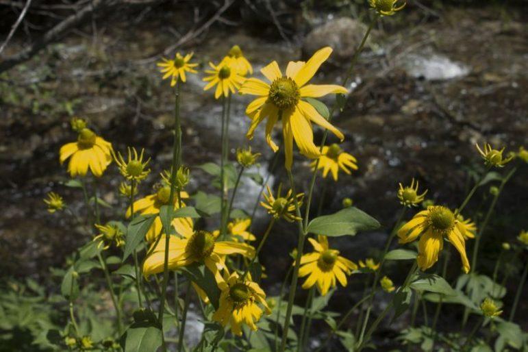 Along Columbine Creek