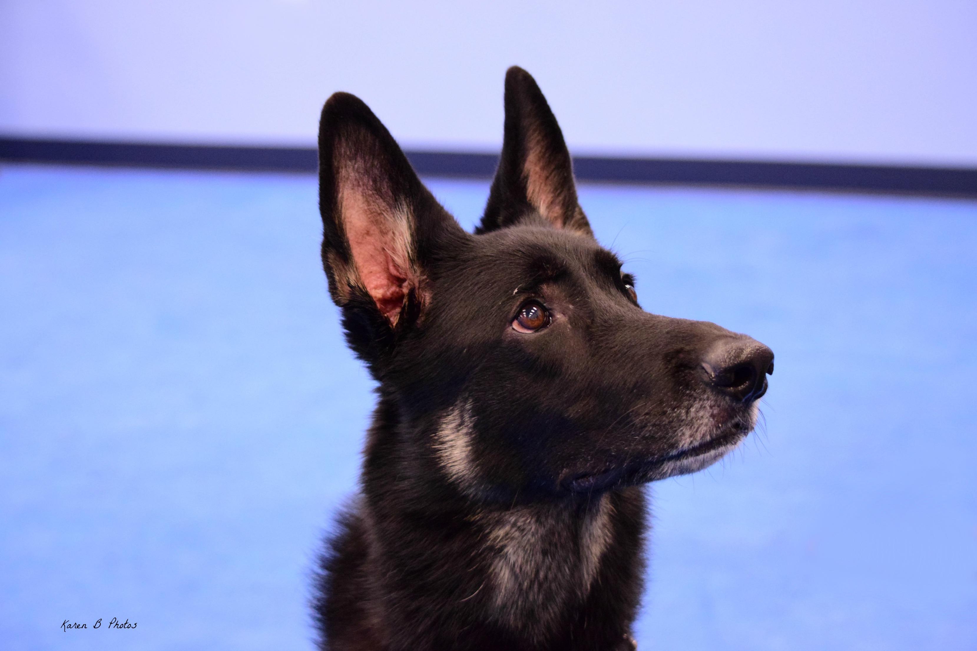 Redirecting Reactive Dog – The Art of Dog Handling