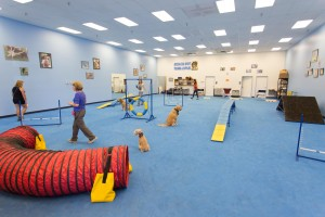 dog trainers school, school for dog trainers, become a dog trainer
