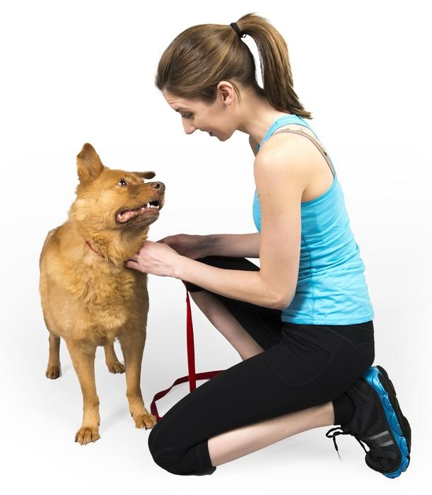 be a dog trainer, dog trainers phoenix
