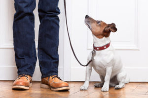 schools for dog trainers, dog trainer program, become a dog trainer