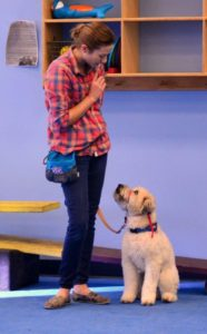 9 reasons you might be a good dog trainer, az dog smart academy