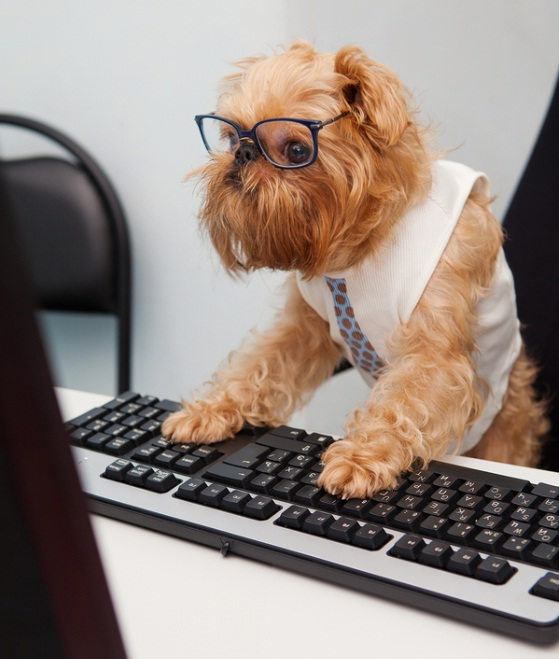 Bring Your Dog to Work – Benefits of Dogs in the Workplace
