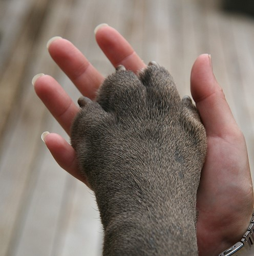 4 Paw Care Tips