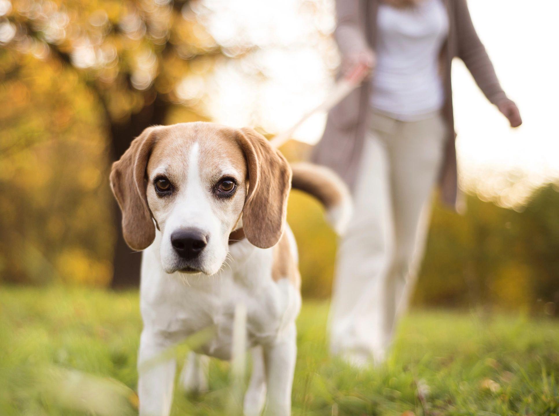 social dog, be a dog trainer, az dog smart academy