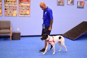 dog trainer school, az dog smart academy