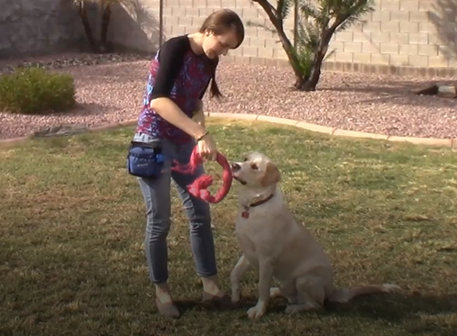 Your Dog Training Career – Board & Train