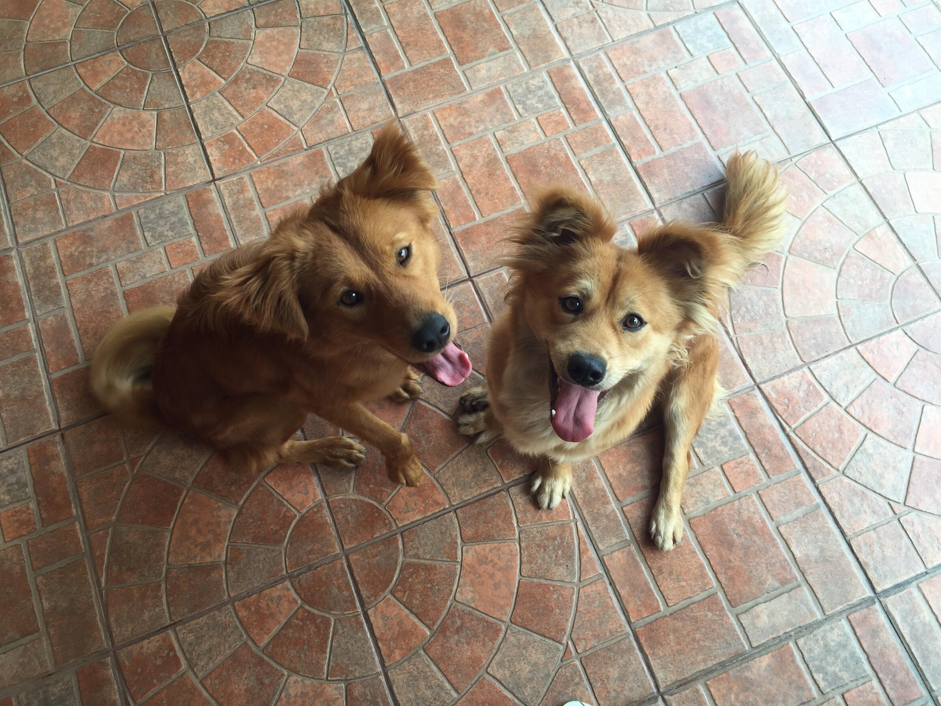 getting my dog to potty, az dog smart, dog trainer academy