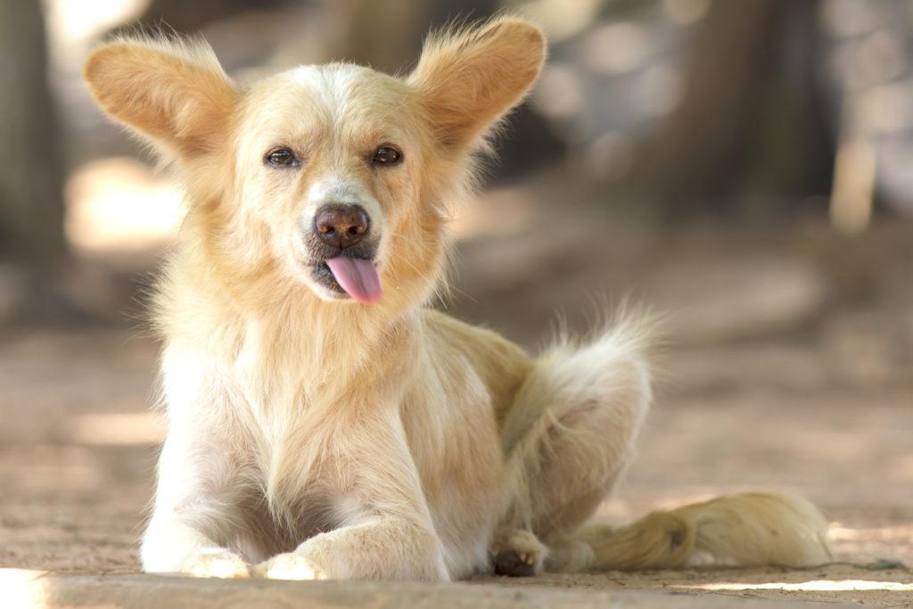 dog won't listen, az dog sports, dog training tips