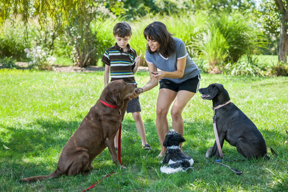 Positive dog training, positive training, az dog sports, az dog smart
