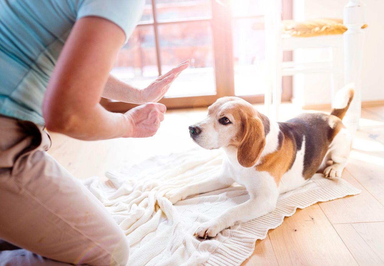 Certified Dog Trainer Credentials
