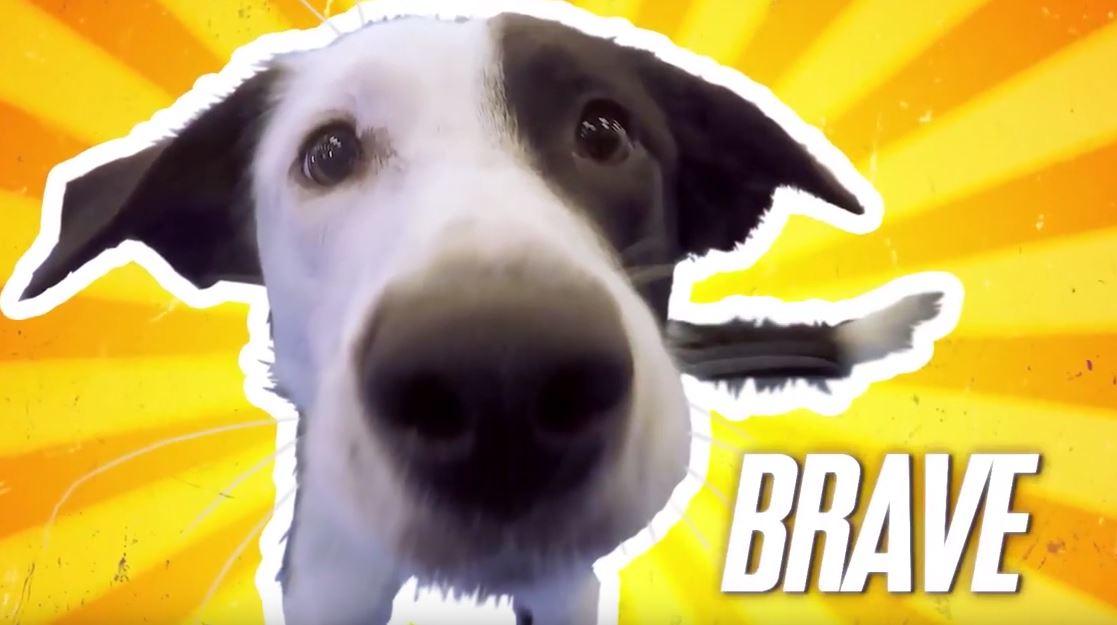 Service Dog Program on TV!