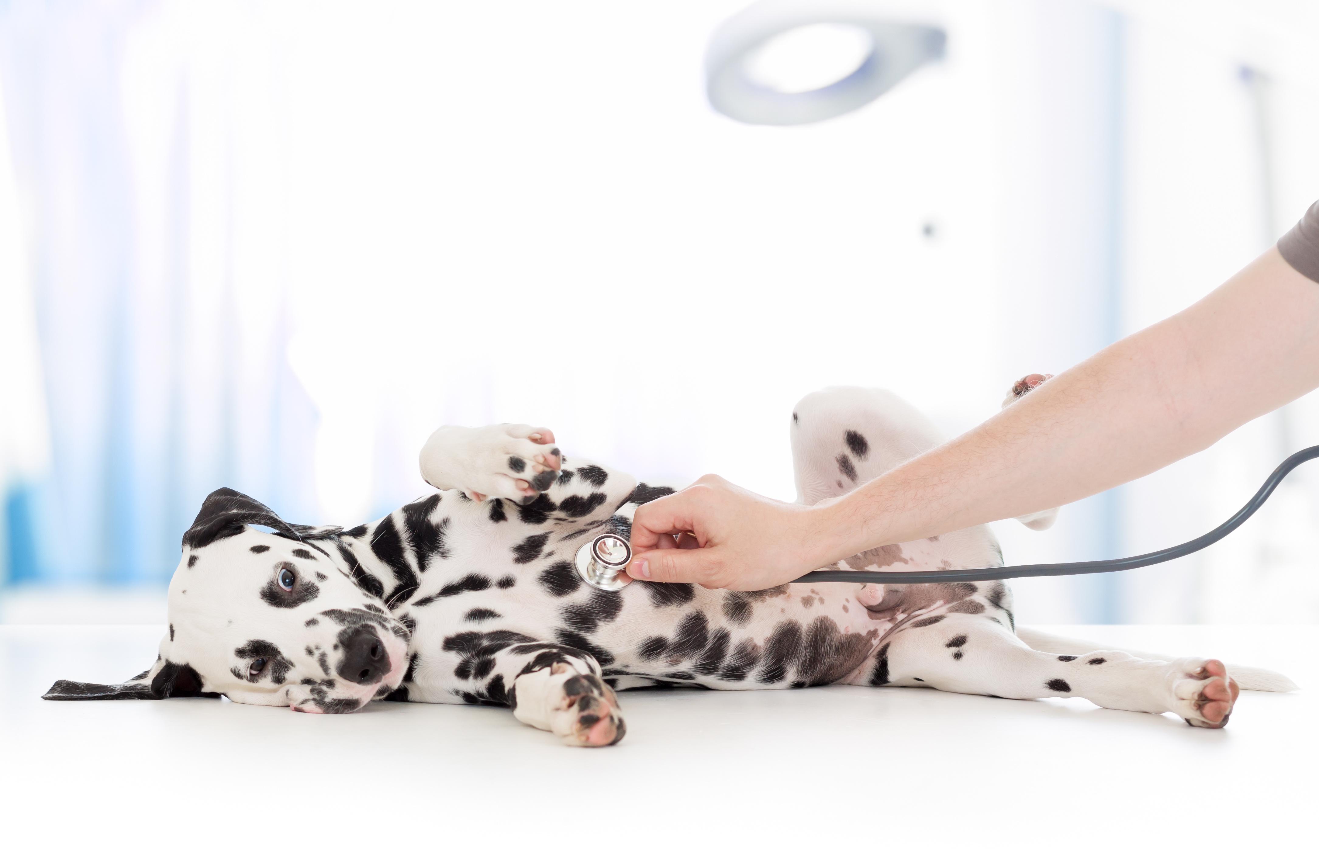 pet insurance, az dog smart, dog training